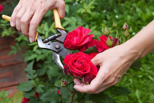 父の日 バラ 造花