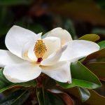 梅雨に花で香りや匂いがする花は?梅雨の時期の花は枯れる?