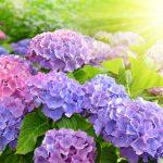 梅雨はお花の名所を訪ねよう!関西