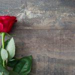 父の日の定番は、どんな花?