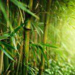 七夕で使う竹と笹ってどう違う?種類は?