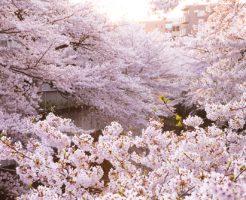 花見 持ち寄り 買う おすすめ 喜ばれる 人気 卵
