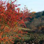 紅葉のきれいな木の種類と名前!美しくない葉と庭に適する苗の低木