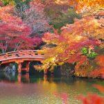 紅葉の見ごろ2018京都の紅葉ベストシーズン!ライトアップスポットは?