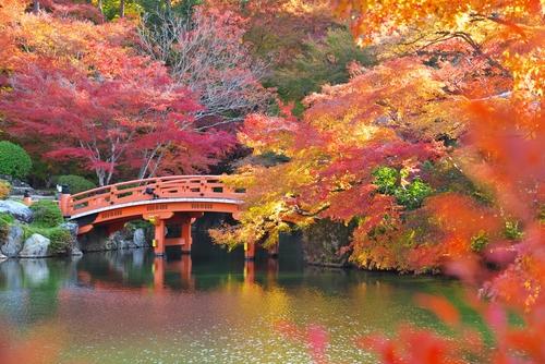 紅葉 見ごろ 2017 京都