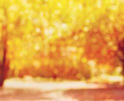 紅葉 葉 病気 枯れる 原因 虫