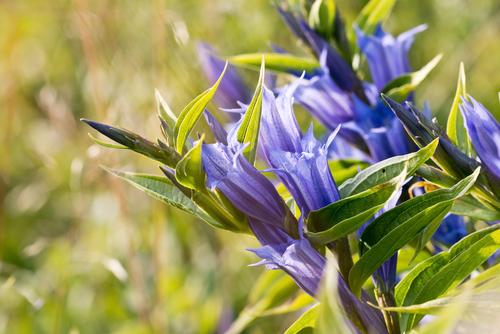 敬老の日 花 種類