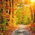 紅葉の美しさや色づきや満開を表現する言葉!