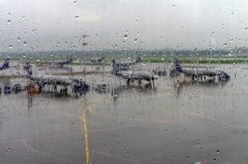 台風 風速 飛行機 欠航