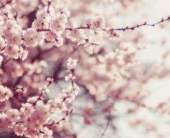 花見 岡山 バーベキュー 時期 穴場 夜桜
