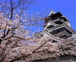 熊本城 花見 場所取り 時間 夜 ライトアップ