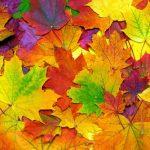 植物の紅葉の仕組み。色づきの期間や色づく理由とは?