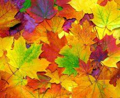 植物 紅葉 仕組み 色づき 期間 理由