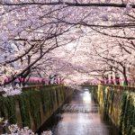 東京の花見!夜桜や屋台を楽しめる人気スポット厳選4選