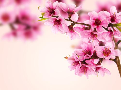 ひな祭り 菜の花 桃の花 由来