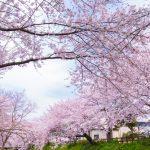 千葉県の花見!屋台のある花見の人気スポット厳選3選