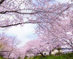 千葉県 花見 屋台 人気スポット