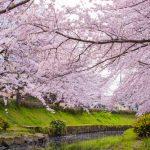 神奈川県の花見!屋台がある花見の人気スポット厳選3選