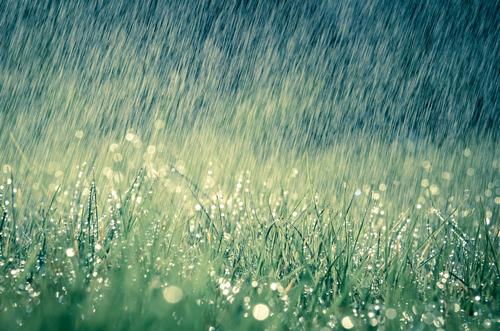 花火大会 中止 条件 雨