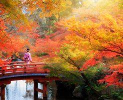 京都 紅葉 コツ 混雑 楽しむ 撮影