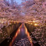 花見の習慣!日本人がこれほど花見が好きな理由とは?