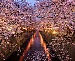 花見 習慣 日本 理由