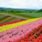 北海道ではシラカンバとハンノキの花粉症は少ないのか、その花粉飛散時期について