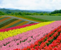 北海道 花粉症 時期 シラカンバ ハンノキ