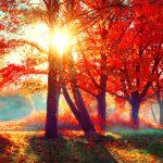 紅葉の色の変化と時期!気温がきれいな紅葉の条件?紅葉期間は
