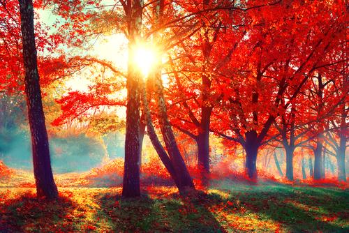 紅葉 色 変化 時期 気温 期間