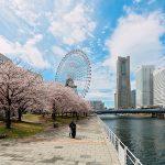 横浜の桜の花見!屋台を楽しむことができる花見のスポット厳選3選
