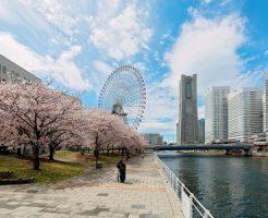 横浜 桜 花見 屋台