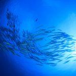 台風の後の置き土産?台風の後は魚が活性化する!?