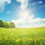 花粉症の原因になるスギとヒノキ、その症状の違いと対策について
