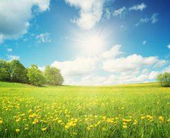 花粉症 スギ ヒノキ 症状 違い 対策