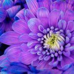 敬老の日に喜んでもらえるお花の種類!厳選5選