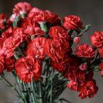 花束を母の日に贈る。カーネーションの色は赤が正解!!