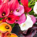 梅雨の時期に咲く花や木の花