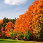 紅葉の長野の穴場と名所!見ごろのおすすめスポット5選と紅葉時期