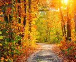 紅葉 美しさ 色づき 満開 表現
