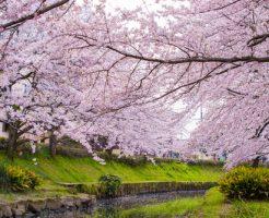 神奈川県 花見 屋台 人気 スポット