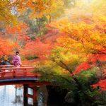 京都の紅葉を楽しむコツ!混雑のピークと穴場撮影スポットは?