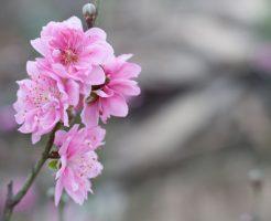 ひな祭り 菜の花 桃の花